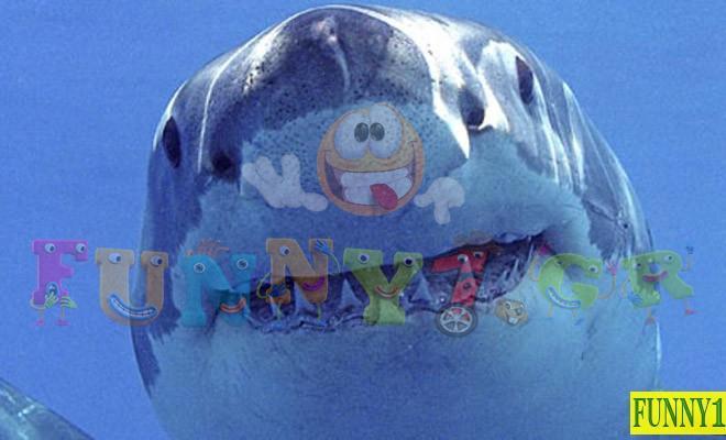 Ανέκδοτο: Ο Μπαμπάς καρχαρίας μαθαίνει στον γιο